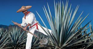 tequila e cachaça